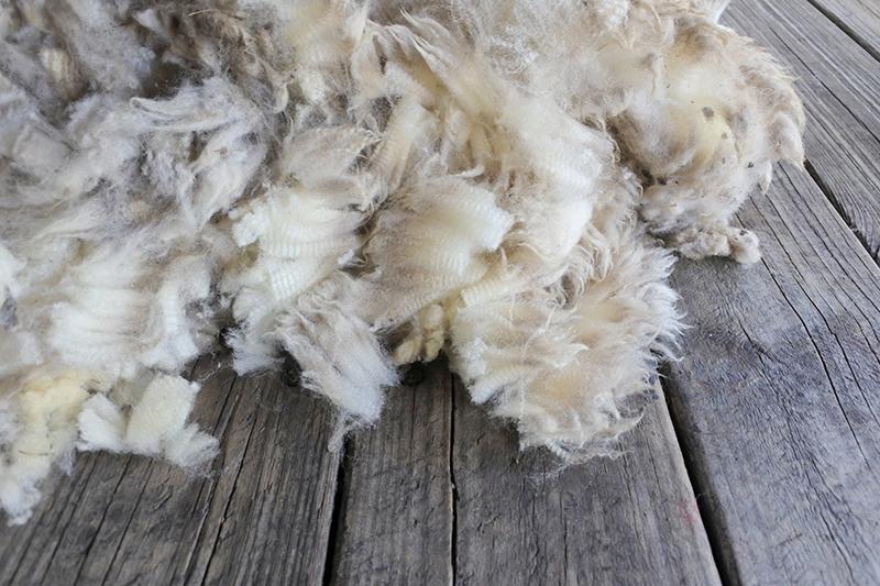 Sheep wool industry